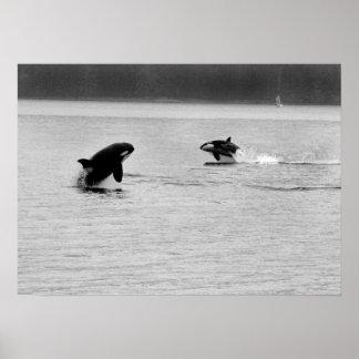 dos ballenas póster