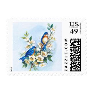 Dos Bluebirds Envio