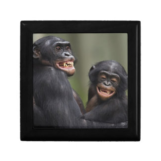 Dos Bonobos sonrientes Caja De Regalo