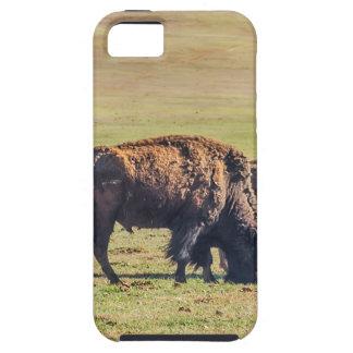 Dos búfalos de pasto en la gama iPhone 5 fundas
