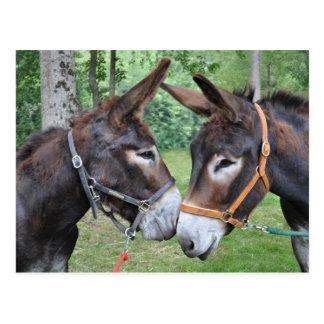 Dos burros amistosos postales