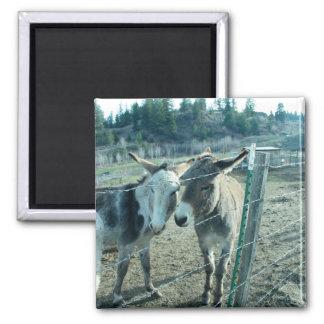 Dos burros imán para frigorifico
