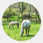 Dos caballos blancos que pastan etiqueta redonda