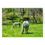 Dos caballos blancos que pastan felicitacion