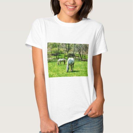 Dos caballos blancos que pastan polera