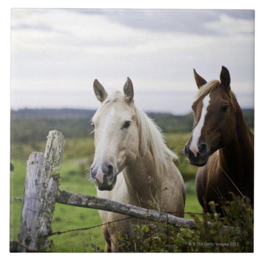 Dos caballos colocan la cerca cercana en campo de  teja cerámica