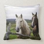 Dos caballos colocan la cerca cercana en campo de  almohadas