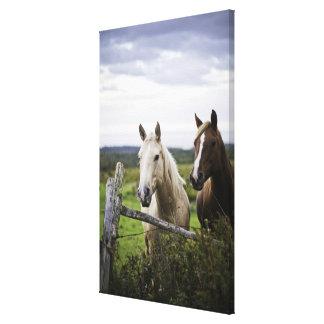 Dos caballos colocan la cerca cercana en campo de  impresión de lienzo