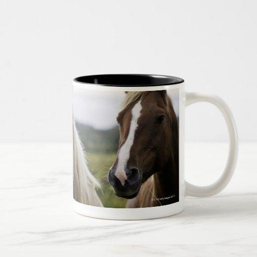 Dos caballos colocan la cerca cercana en campo de  taza dos tonos