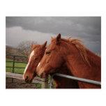 Dos caballos coloreados moreno postal