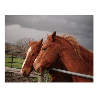 Dos caballos coloreados moreno postales