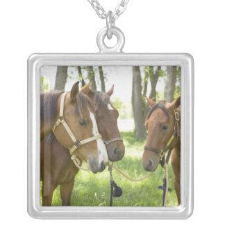 Dos caballos cuartos americanos que se colocan en  colgantes