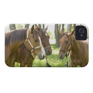 Dos caballos cuartos americanos que se colocan en  iPhone 4 Case-Mate funda
