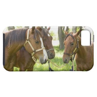 Dos caballos cuartos americanos que se colocan en  iPhone 5 Case-Mate protector