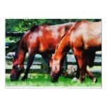 Dos caballos de Brown Comunicados Personalizados