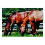 Dos caballos de Brown Felicitacion
