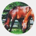 Dos caballos de Brown Pegatinas Redondas