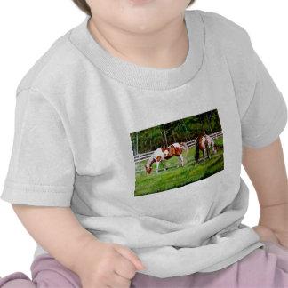 Dos caballos de la pintura que pastan camisetas
