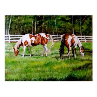 Dos caballos de la pintura que pastan tarjeta postal