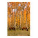 Dos caballos de pasto en el otoño postal