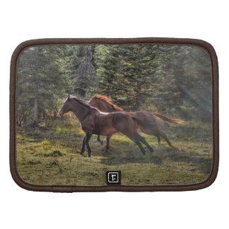 Dos caballos del rancho que corren en bosque organizadores
