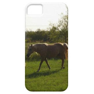 Dos caballos en campo abierto iPhone 5 carcasa