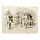 Dos caballos en el pesebre postales