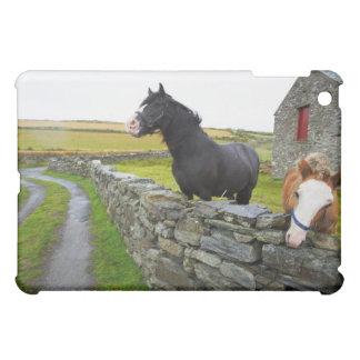 Dos caballos en granja en Inglaterra rural