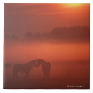 Dos caballos en la puesta del sol azulejo cuadrado grande