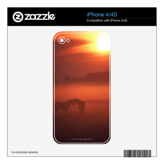 Dos caballos en la puesta del sol calcomanía para iPhone 4S