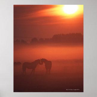Dos caballos en la puesta del sol póster