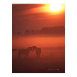 Dos caballos en la puesta del sol postales