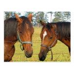 Dos caballos en un campo, caballos pensativos de postal