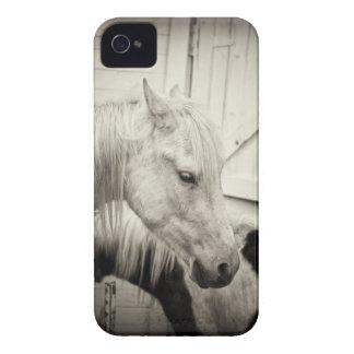 dos caballos fuera de un establo blanco y negro iPhone 4 cárcasa