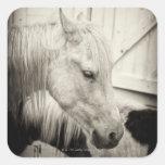 dos caballos fuera de un establo blanco y negro calcomanía cuadradas