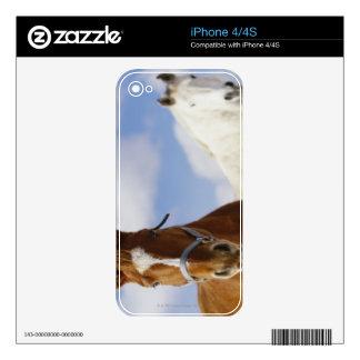 Dos caballos iPhone 4 calcomanía