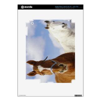 Dos caballos pegatinas skins para iPad 3