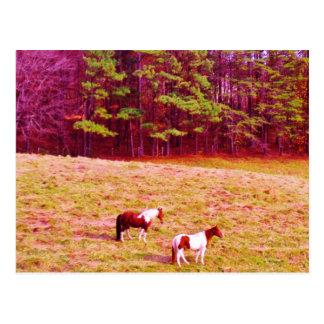 Dos caballos pintados tarjeta postal