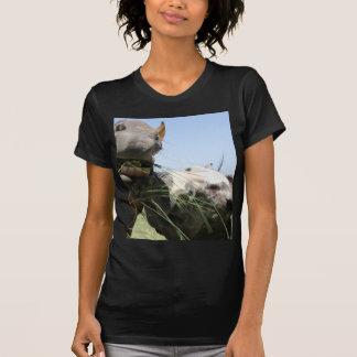 Dos caballos que comen junto camiseta