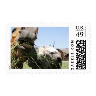 Dos caballos que comen junto timbres postales