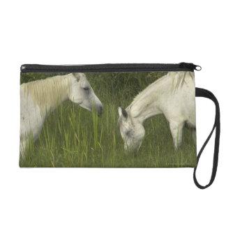 Dos caballos que comen la hierba
