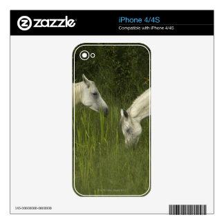 Dos caballos que comen la hierba iPhone 4 skins