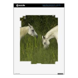 Dos caballos que comen la hierba pegatinas skins para iPad 3