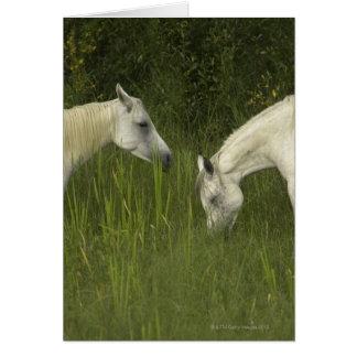 Dos caballos que comen la hierba tarjeta de felicitación