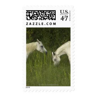 Dos caballos que comen la hierba timbres postales