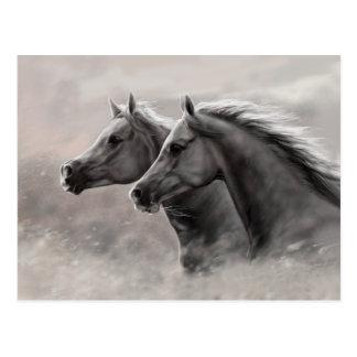 Dos caballos que pintan sementales negros del postal