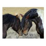 Dos caballos salvajes de Brown Nuzzling Postal