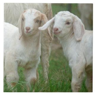 Dos cabras blancas lindas del bebé teja cerámica