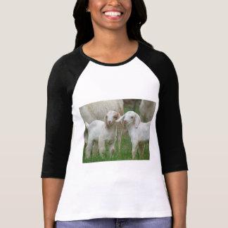 Dos cabras blancas lindas del bebé polera