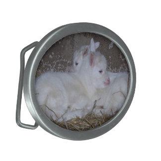 Dos cabras del bebé en paja hebilla cinturon oval
